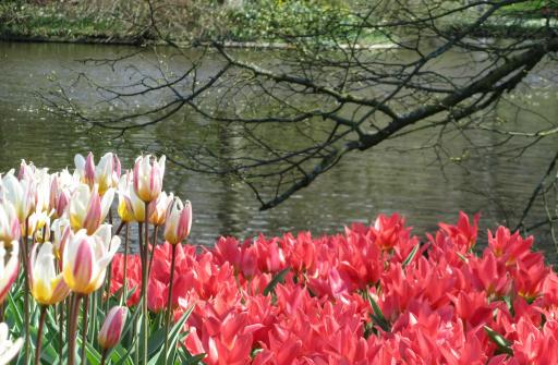 Kuekenhof Gardens