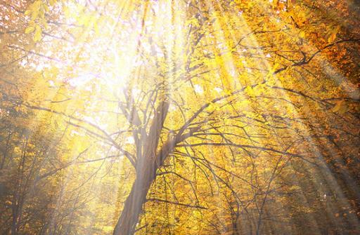 Autumn - the year's last, loveliest smile